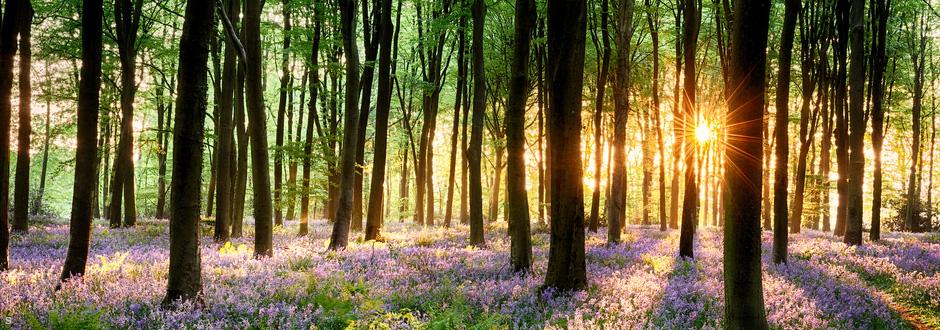 Help British Woodlands
