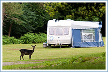 longbeech-campsite