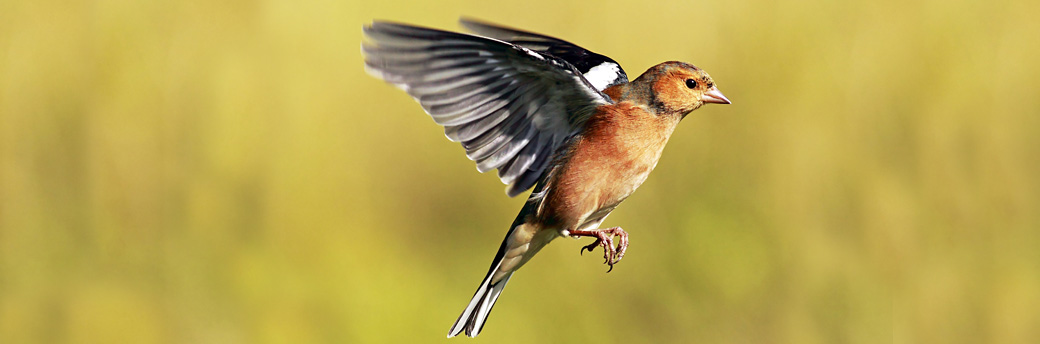 Help Protect British Birds