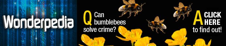 Can Bumblebees Solve Crimes