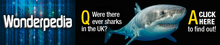 Were there Once Sharks in the UK
