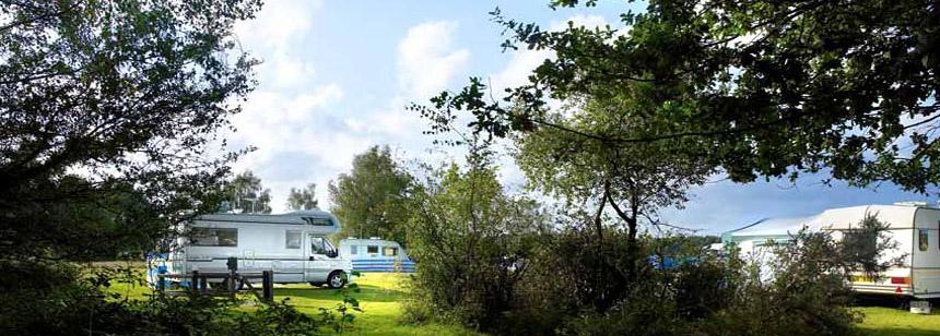 Aldridge Hill Camping in the Forest Campsite